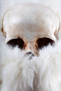 <b>Skull with fur</b> - color photograph / 45x30 cm / edition: 3 and 2 a.p. / 2015